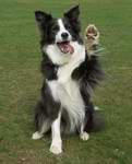 Jazz performing a high five wave