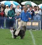 Richard Curtis and Jazz perform a canine freestyle / dog dancing routine