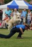 A dancing dog in the part of the dog displays