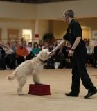 canine freestyle, heelwork to music, dancing dog