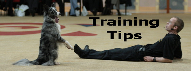Training tips for canine freestyle or heelwork to music