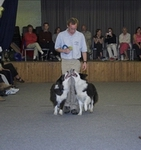 Two dogs performing heelwork to music
