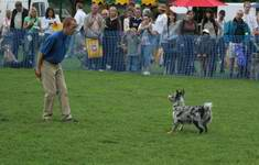 Richard Curtis and Pogo demonstrating dog dancing / canine freestyle