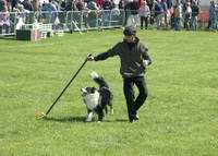 Richard Curtis and Jazz perform part of the k9 freestyle dancing dog display